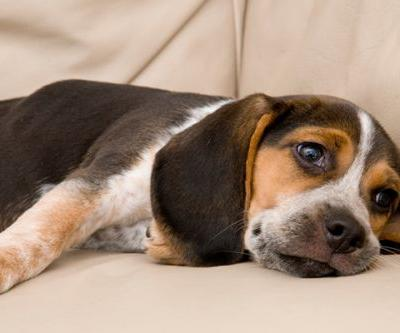 What to Know About Separation Anxiety in Dogs