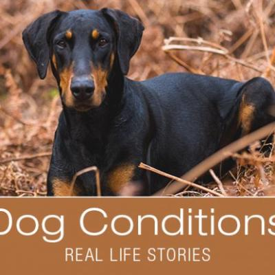 A Subtle Sign for One Dog, a Major Red Flag for Another: Jade's Story
