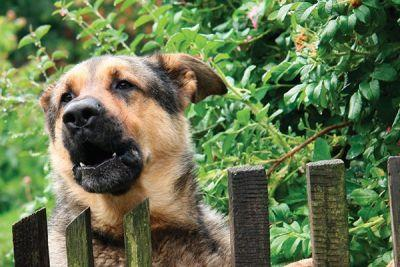Is Your Dog Barking and Annoying Your Neighbors? Here's What to Do