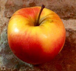 Can Dogs Eat Apples? Remove These 4 Parts to be Safe
