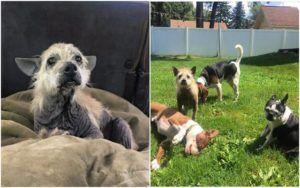 Abandoned, Hairless & Hopeless Dog Finds The Perfect Family To Rescue Him