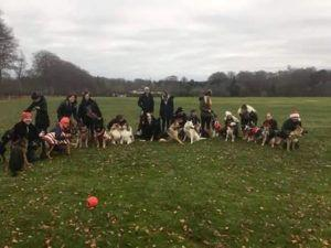 Puppy Owner's Playdate Invites Evolved Into A Doggy Social Club With 40+ Members