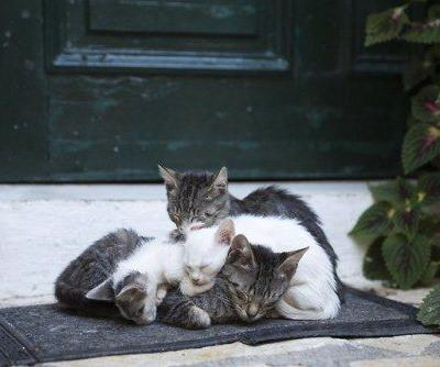 A Greek Cat Sanctuary Is Hiring Someone to Live With 55 CatsA