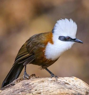 Top 25 Birds of Asia