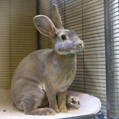"""""""LOLA"""" Great bunny!!! - lots of personality and super soft"""