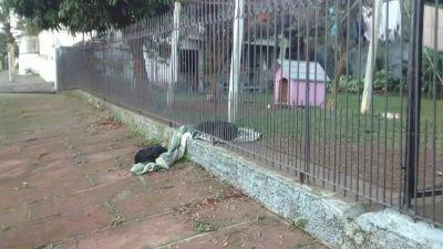 Puppy drags his new blanket outside so that a homeless dog could sleep on it