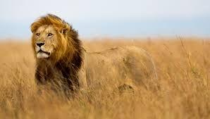 'Wildlife is worth far more alive than dead', 120.1bn wildlife tourism can eradicate illegal trade
