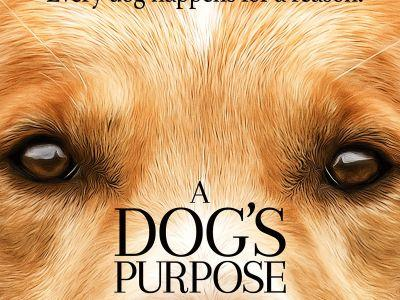 A Dog's Purpose Premiere Canceled In Response To Animal Cruelty Accusations