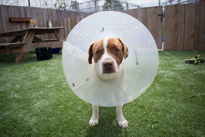 Adoptable Dogs + Artists = CONE OF FAME