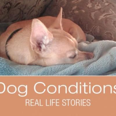What Would You Do If It Was Your Dog: The Story of Blind Maximus