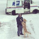 The Highlight of This Golden Retriever's Day Is When His Best Friend the Mailman Rolls Up