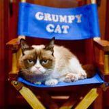 Grumpy Cat, Instagram's Lovable Yet Perpetually Frowning Cat, Has Died