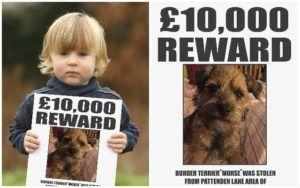 Simon Cowell Offers £10,000 Reward To Reunite Boy With His Stolen Dog