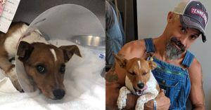 """""""Silver Linings"""" Discovered in Adversity for Wounded Veteran and Injured Dog"""