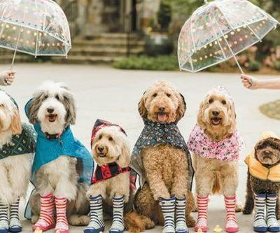 That Dood Squad: The Ultimate Photoshoot of Doodles