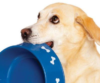 What and How to Feed Your Overweight Dog