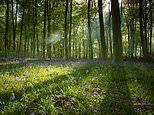 The best places in the UK to try 'Forest Bathing'
