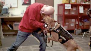 How Howie The Dog Allowed This Couple To Get Back To A Normal Way Of Life