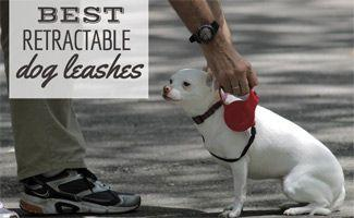 Which Is the Best Retractable Dog Leash?