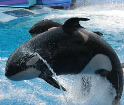 As SeaWorld's CEO Joel Manby Steps Down-What Will Become of His Corporate Policy Promises?
