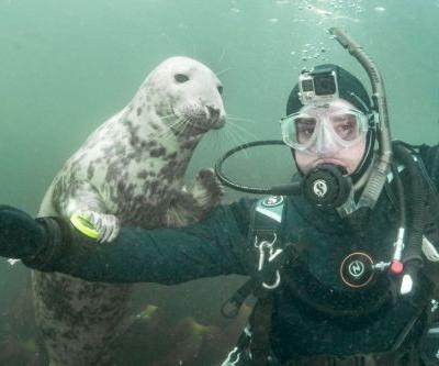 This diver got treated to his very own 'sealfie'