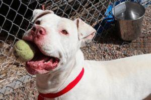 Dog Stolen From Colorado Shelter Turns Up In Las Vegas