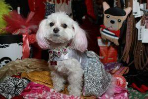 Celebrity Catwalk Helps Dogs & Cats Affected by Hurricanes Harvey, Irma