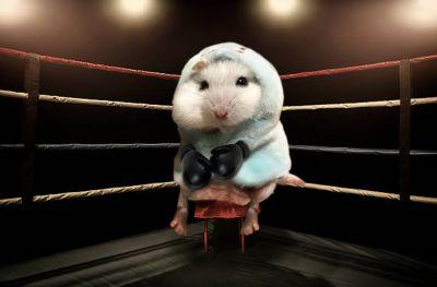 Hamster In Hoodie Gets Into All Kinds Of Shenanigans During Photoshop Battle