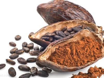 Rebuilding the Amazon forest with chocolate: How cocoa could be the key to making South America green again