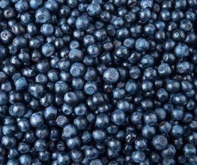 Compound found in blueberries linked to increased physical activity in mouse study