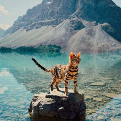 Meet Suki, the Bengal cat who's living out her best forest dreams
