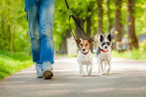 8 Reasons to Walk Your Dog!