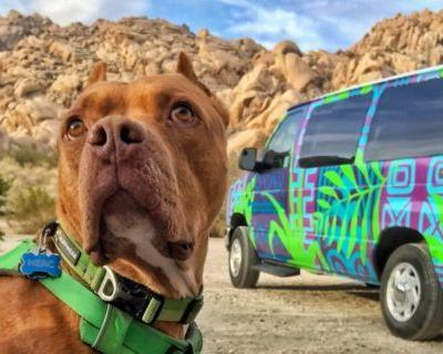 Renting an Adventure Van with Pets