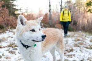 Celebrate National Take a Hike Day with Your Dog
