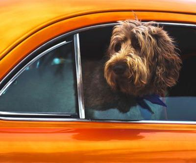 Road trip essentials for a trip with your Pet