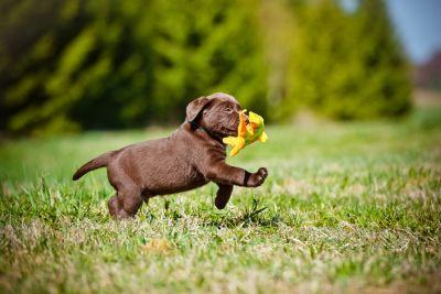 Tips to Help with Your Allergies to Animals