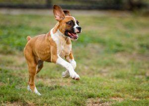 """Does Your Dog Get """"The Zoomies""""? Here's What It Means"""