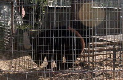 USDA Revokes Iowa Roadside Zoo's Exhibitor License and Issues $10,000 Penalty