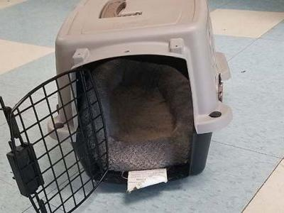 Chihuahua abandoned in carrier dies of heat stroke, MSPCA says