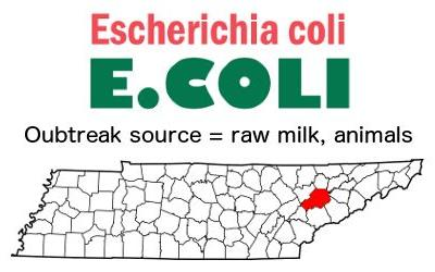 Two sets of children stricken with two strains of E. coli O157 in Tennessee outbreak