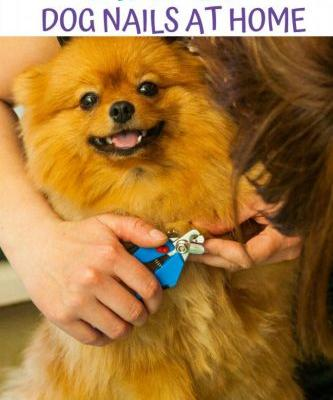 How to Clip Dog Nails at Home