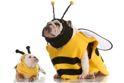 Dealing with a Dog Bee Sting? What to Do