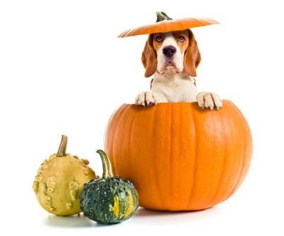 10 Signs Your Dog is So Over Pumpkin Spice