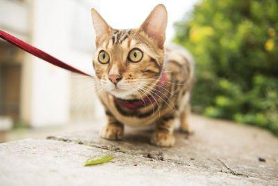 The RSPCA isn't impressed with you walking your cats on leads, guys