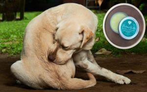 5 Ways Itch Balm Helps Senior Dogs Cope With Skin Problems