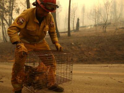Photos Of Animals Escaping The Wildfires Will Break Your Whole Damn Heart