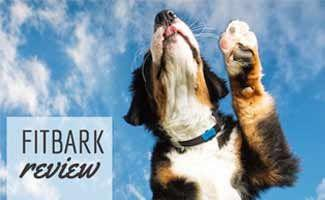 FitBark Review: A Healthy Dog is a Happy Dog