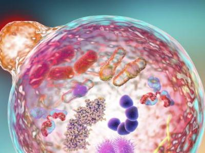 Benefits of Autophagy, Plus How to Induce It