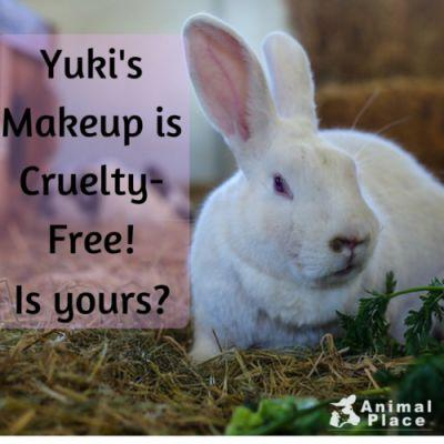 Yuki is one of our many rabbits rescued from a research