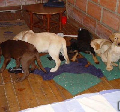 'Puppies to smuggle drugs': Vet sentenced for implanting heroin in dogs